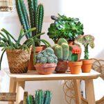 Decoration interieur avec cactus