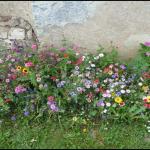 Decoration de jardin fleuri
