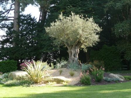 Decoration jardin massif