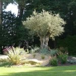 Decoration massif de jardin
