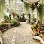 Décoration jardin tropical
