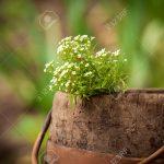 Tonneau en bois décoration jardin