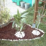 Photo de decoration de jardin