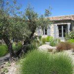 Decoration jardin avec olivier