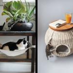 Chat decoration maison