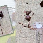 Decoration de jardin en fer forgé animaux