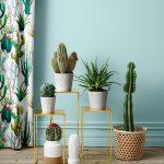Cactus decoration interieur