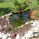 Decoration petit bassin jardin