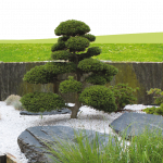 Jardin d'agrément décoration