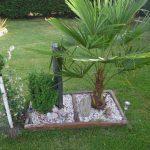 Decoration jardin palmier