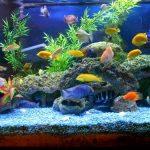 Décoration aquarium fait maison