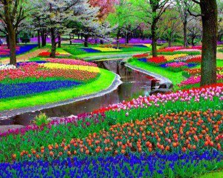 Decoration jardin fleurs