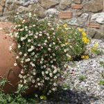 Jarre pour decoration de jardin