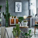 Cactus décoration intérieur