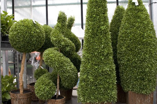 Plantes de decoration jardin