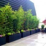 Jardin decoration bambou