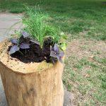 Souche décoration jardin