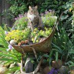 Jardinage decoration jardin