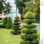 Decoration arbres jardin