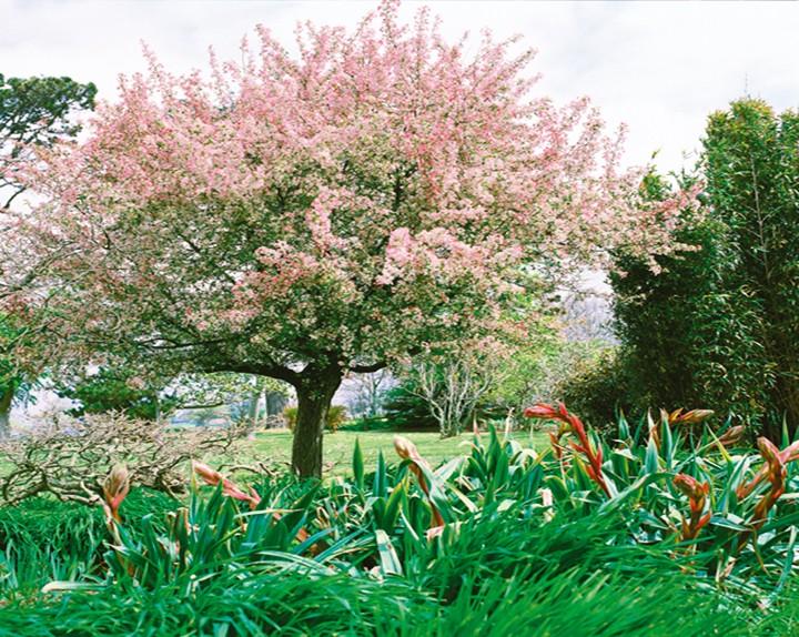 Decoration jardin arbre