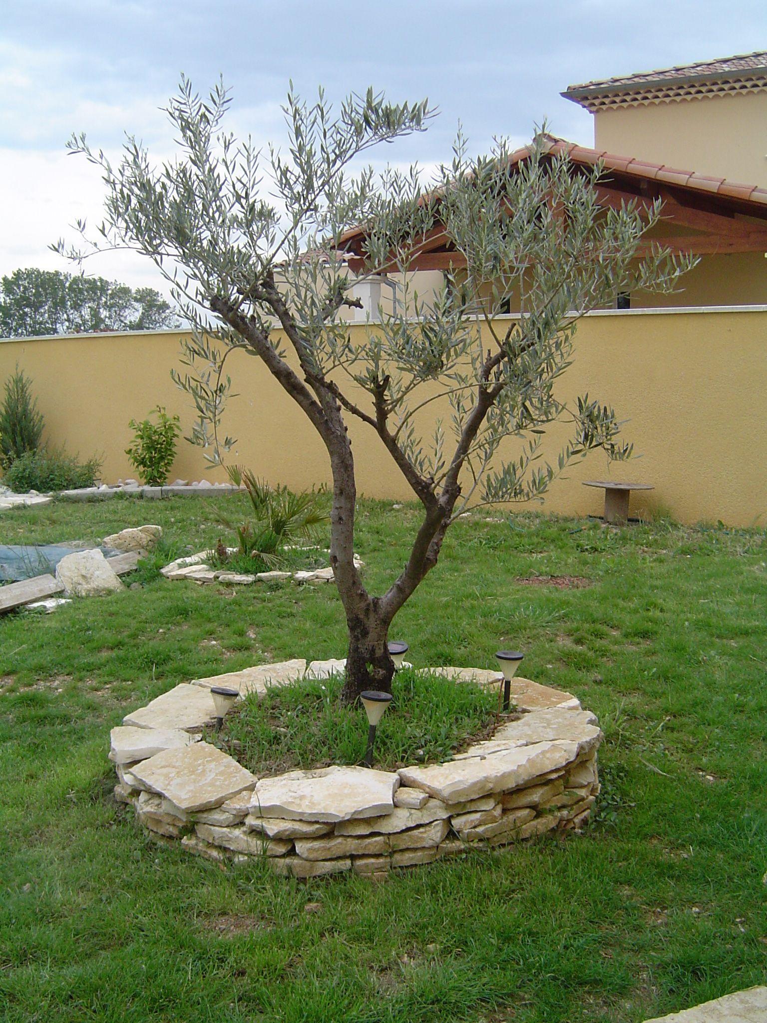 Décoration de jardin avec un olivier