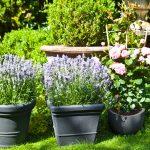 Décoration votre jardin