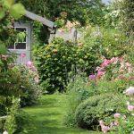 Decoration de jardin avec des plantes